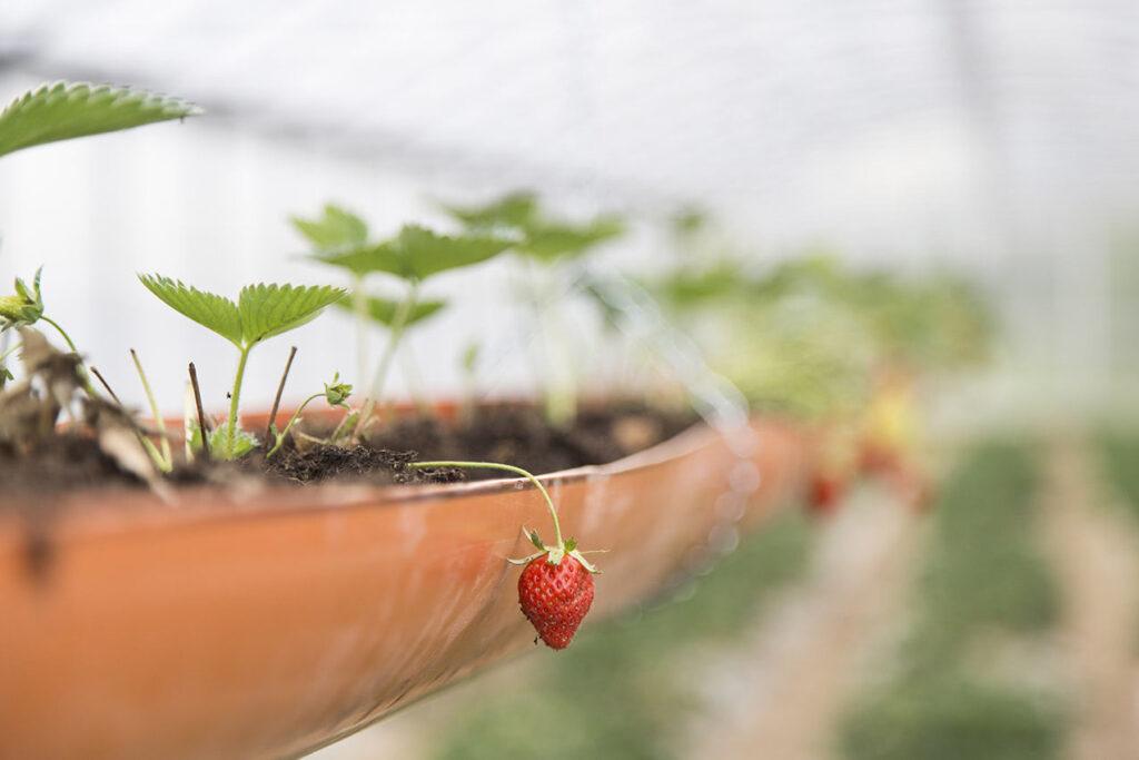 BONTÀ Come i prodotti che vengono coltivati, lavorati, trasformati.