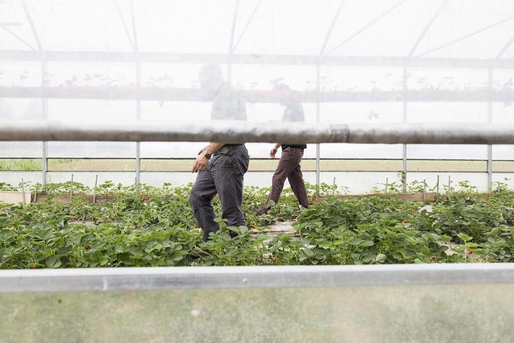 COLLABORAZIONE Come il lavoro efficace, meticoloso e costante delle api operaie.
